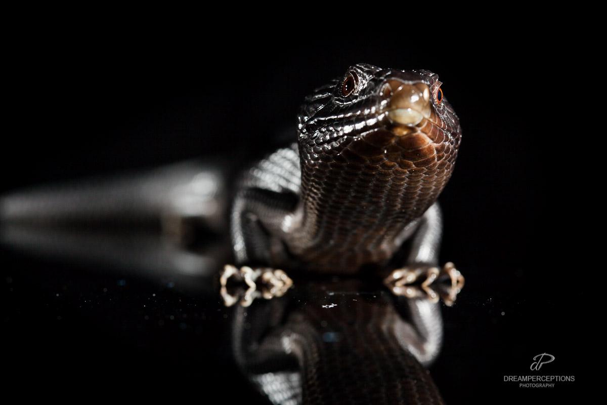 2016_04_reptiles_0051