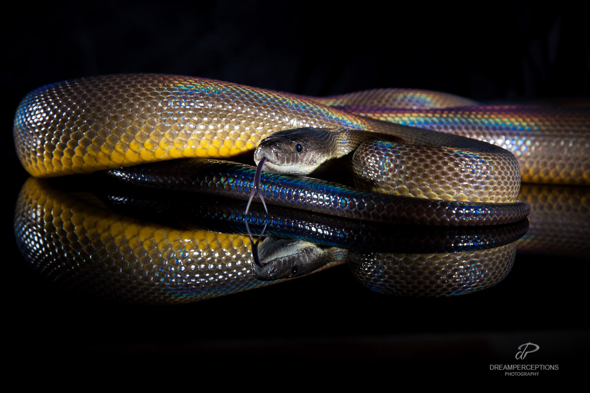 2016_04_reptiles_0301