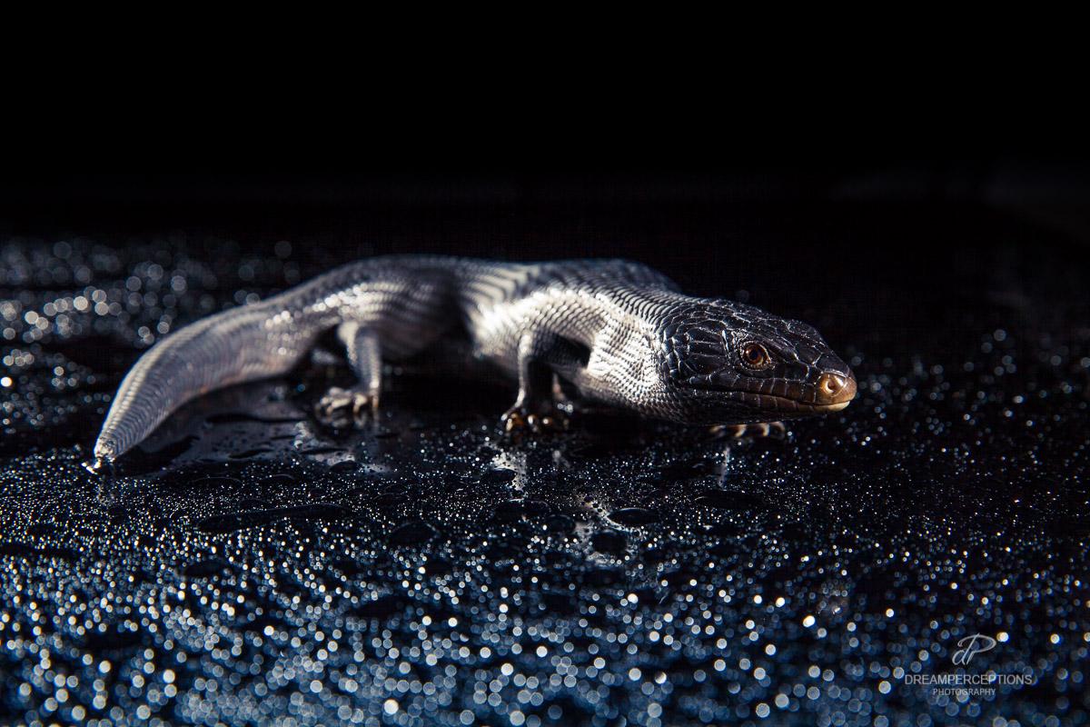 2016_04_reptiles_0525