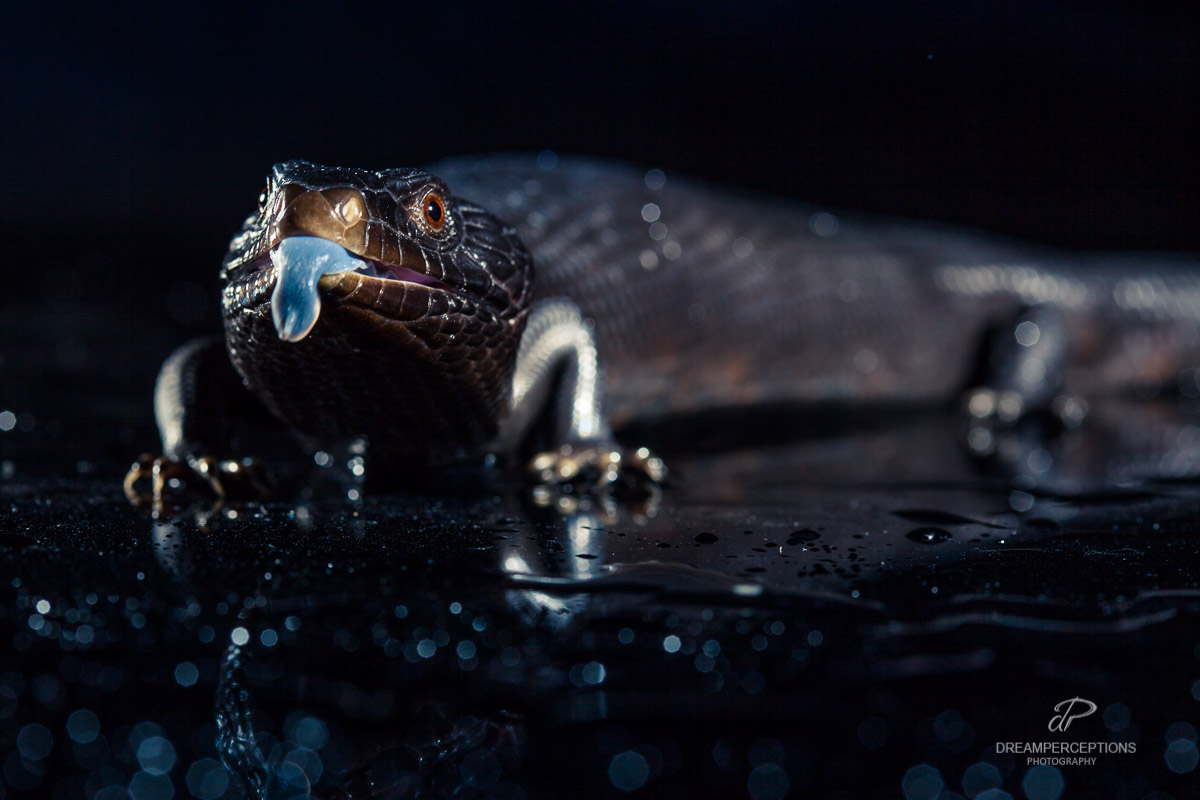 2016_04_reptiles_0567