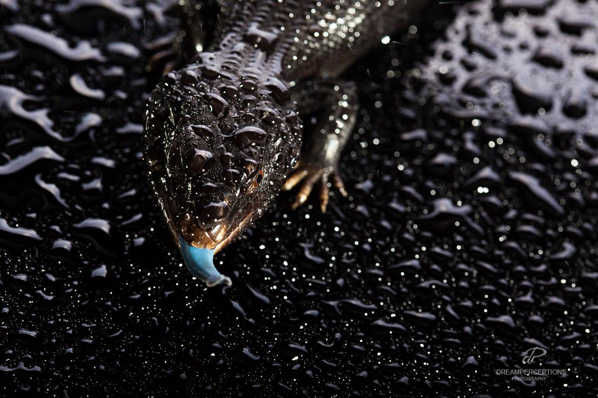 2016_04_reptiles_0759